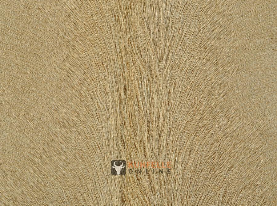 kuhfell teppich beige 225 x 210 cm kuhfelle online bestellen. Black Bedroom Furniture Sets. Home Design Ideas
